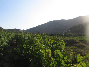 Winery of Synadinakis