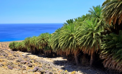 Palm forest of Agios Nikitas